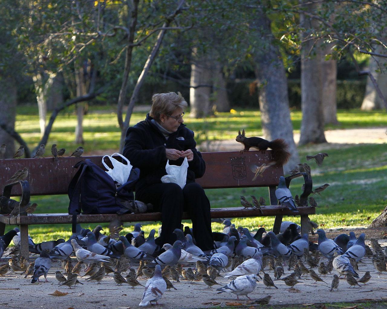 ardillas y palomas
